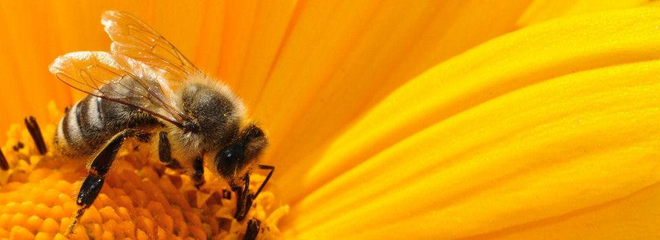 Bienenpolitik